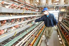 落水正商店直営の養鶏場