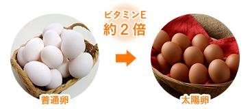ビタミンE約2倍 普通卵と太陽卵