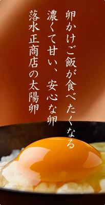 卵かけご飯が食べたくなる 濃くて甘い、安心な卵 落水正商店の太陽卵