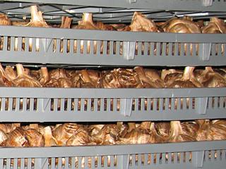 一定の温度と湿度管理で熟成発酵させる黒にんにく