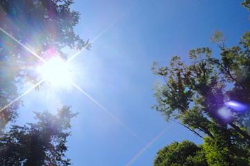 真夏の強い日差し